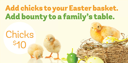 Add chicks to your Easter basket. Add bounty to a family's table. Chicks: $10